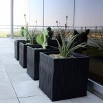 Exterior Plants