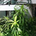 Building Atrium
