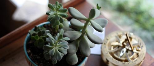 Jade Plant | Plant Service